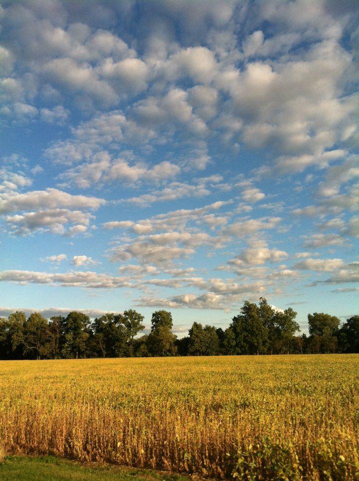 Comfortable flatish fields of Ohio