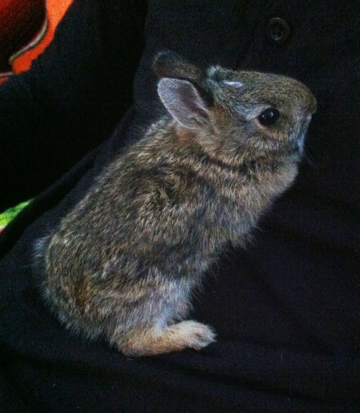 Benny the Bunny! March 2016 - April 2016